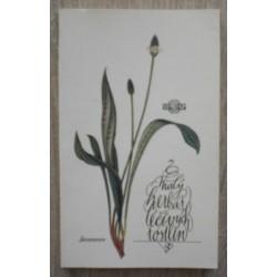 - Malý herbář léčivých rostlin